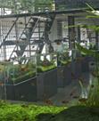 A Visit to the ADA Nature Aquarium Gallery