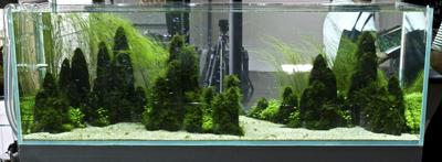 Amano Island Aquarium