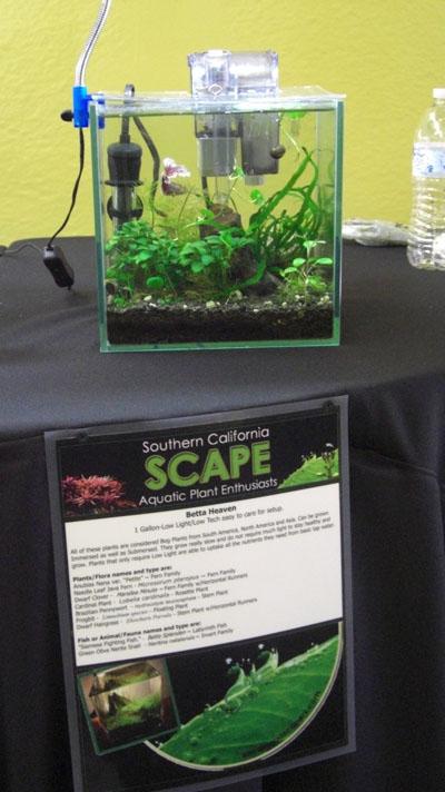 Planted Aquarium Exhibit