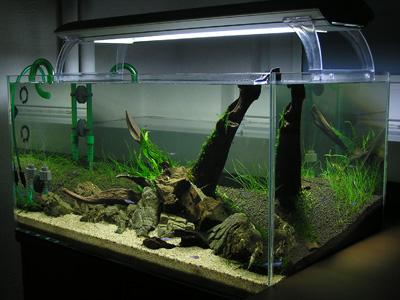 Setup Aquarium