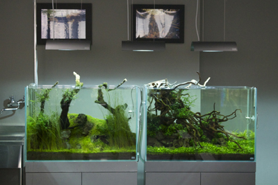 Two Island Planted Tanks