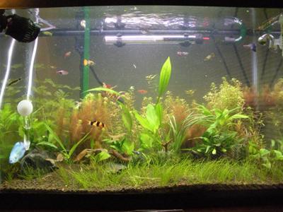 Practice Aquarium