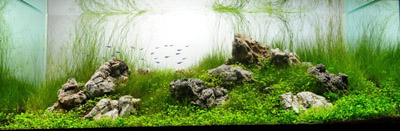 Vietnamese Aquascape
