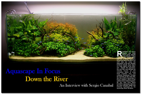Aquascape in Focus: Down the River
