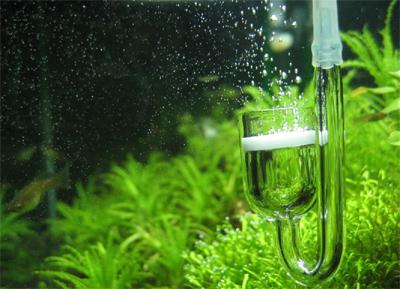 CO2 Glass Diffuser