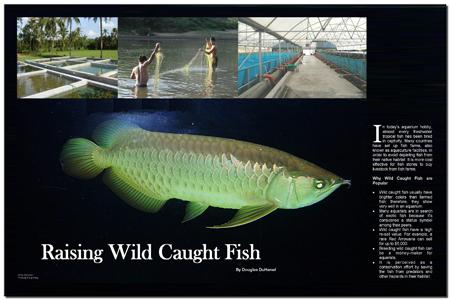 Raising Wild Caught Fish