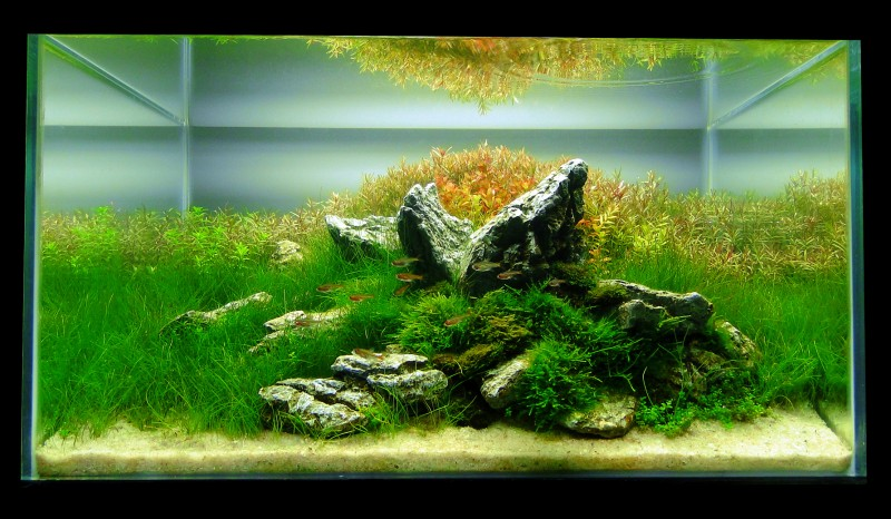 Aquascaping World Competition - Gallery - Jurassic Jungle ...