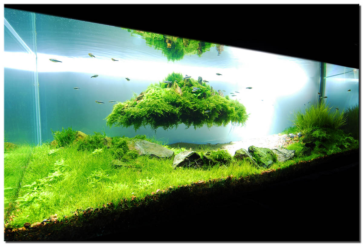 Tutorial Aquascape Pemula